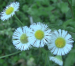 wildflowersApr28