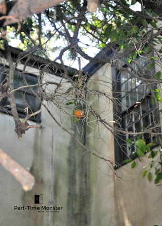 lonefruit
